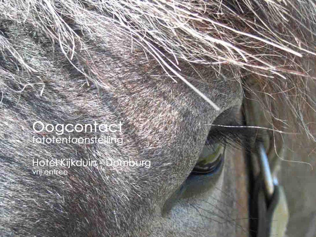 oogcontact expo Kijkduin